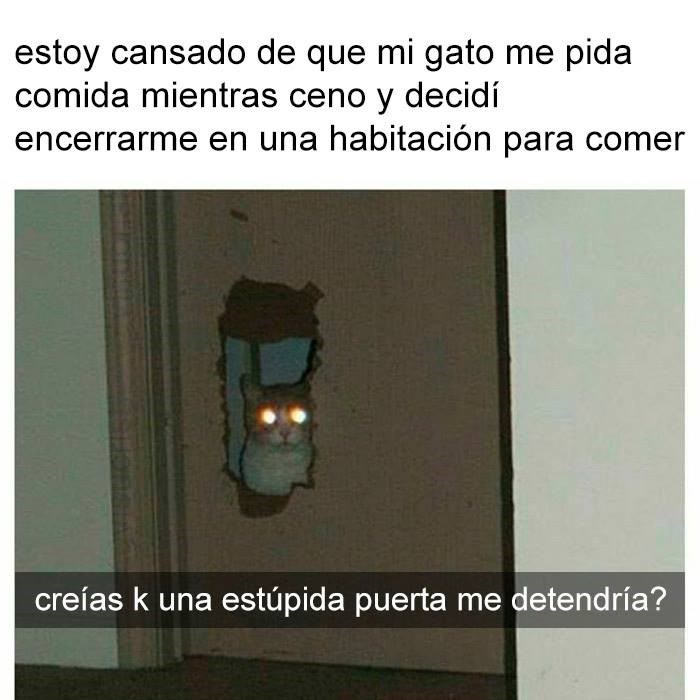 Cheezburger Image 9102397184