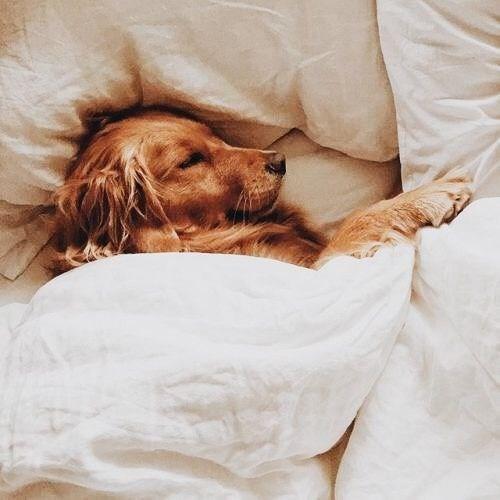 blanket - Dog