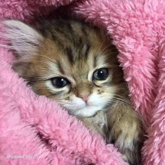blanket - Cat - Oasami 0415
