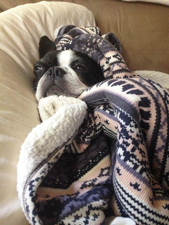 blanket - Vertebrate