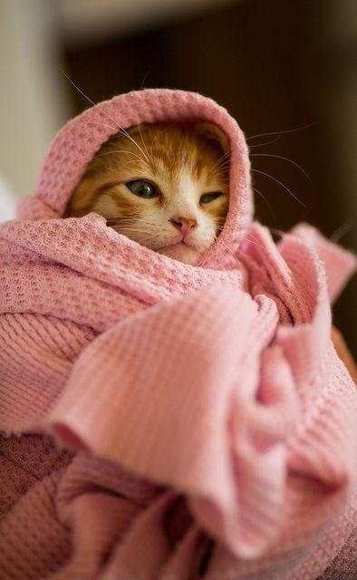 blanket - Cat - REPP