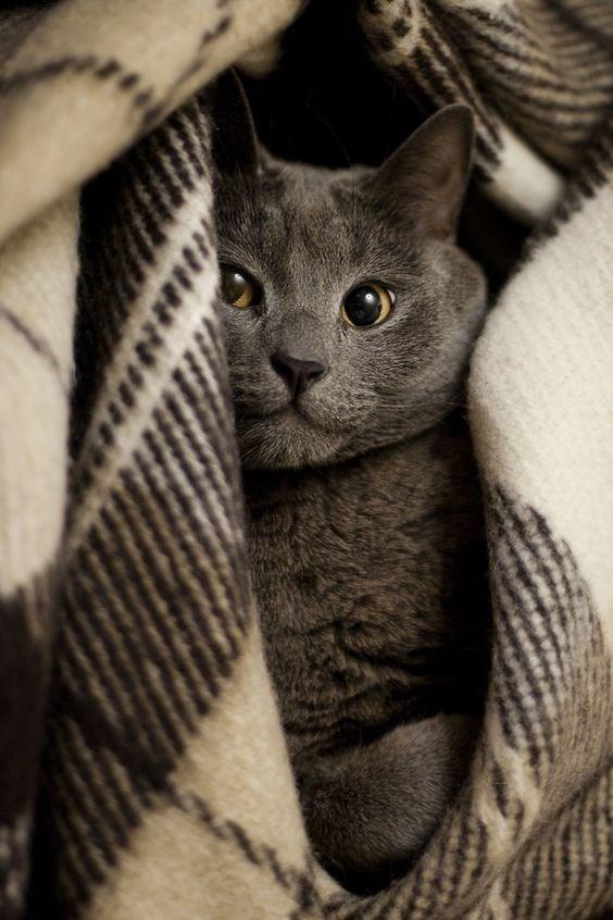 blanket - Cat