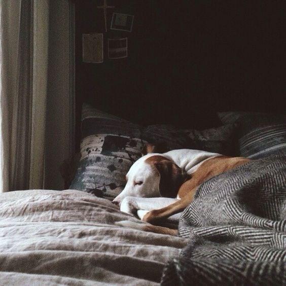 blanket - Canidae