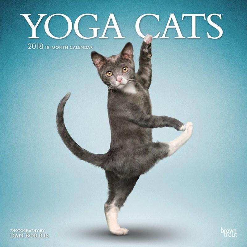 Cat - YOGA CATS 2018 18-MONTH CALENDAR brown PHOTOGRAPHY BY DAN BORRIS trout