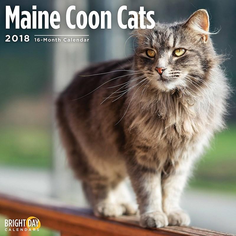Cat - Maine Coon Cats 2018 16-Month Calendar BRIGHT DAY CALENDARS