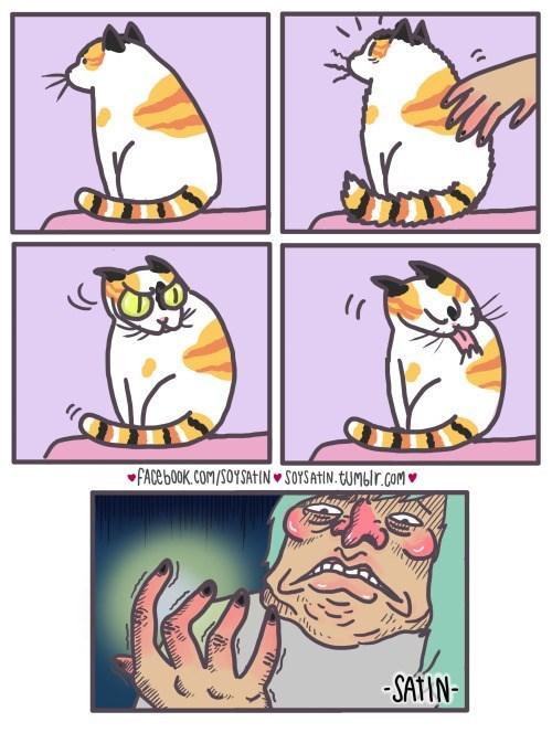 cuando acaricias a un gato y este se limpia