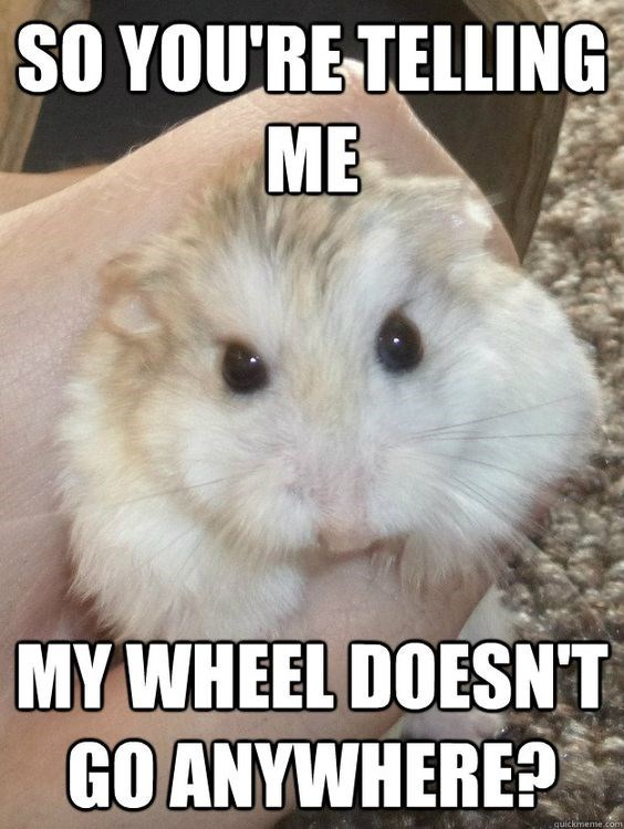 Facial expression - SO YOURE TELLING ME MY WHEEL DOESNT GO ANYWHERE? quickmene.com