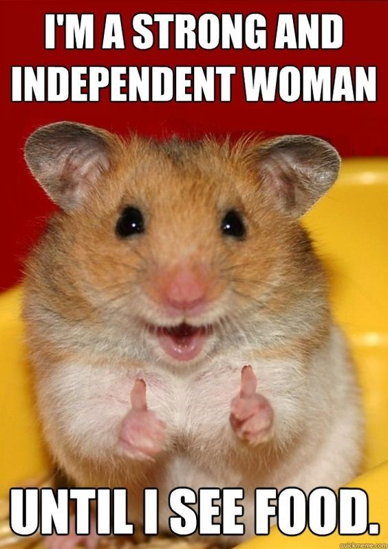 Rat - I'MA STRONG AND INDEPENDENT WOMAN UNTIL ISEE FOOD quickmerme.comm