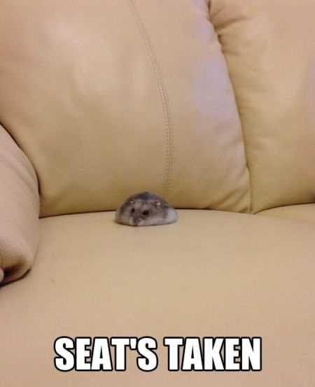 Ferret - SEATS TAKEN
