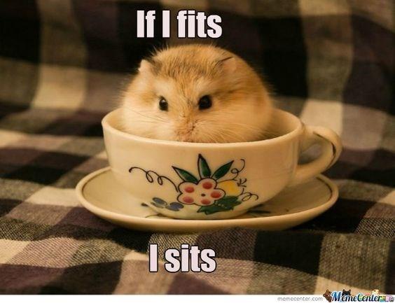 Cup - If I fits Isits ManeCenter memecenter.com