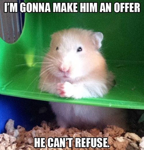 Hamster - I'M GONNA MAKE HIM AN OFFER HE CANT REFUSE