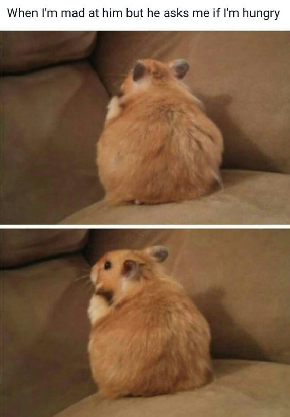 Hamster - When I'm mad at him but he asks me if I'm hungry PS