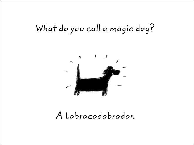 Text - What do you call a magic dog? A Labracadabrador.