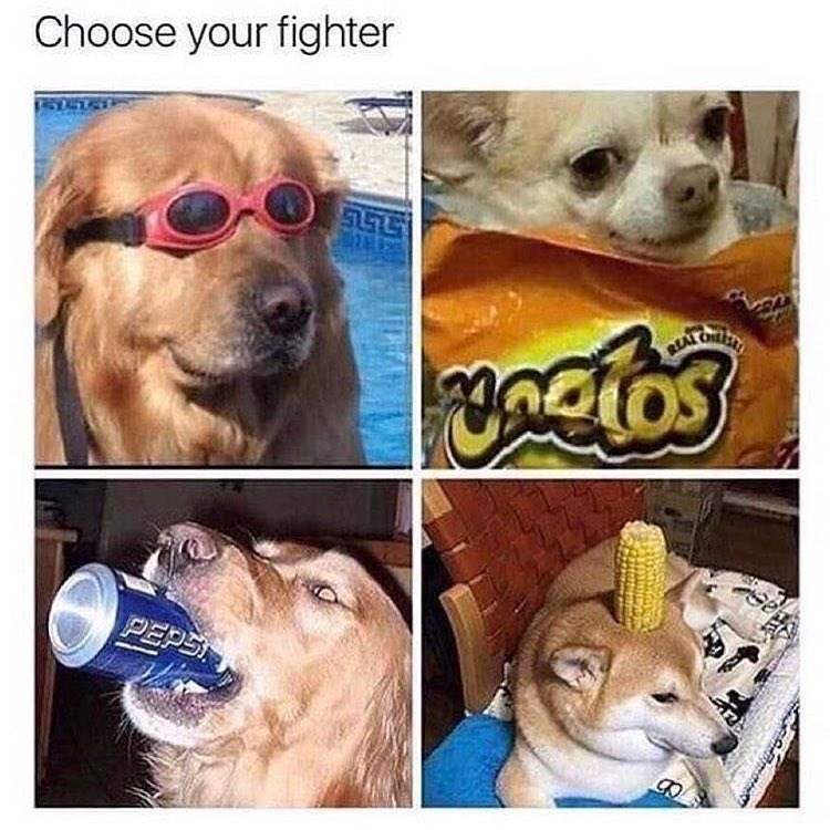 Funny choose your fighter meme with dogs.