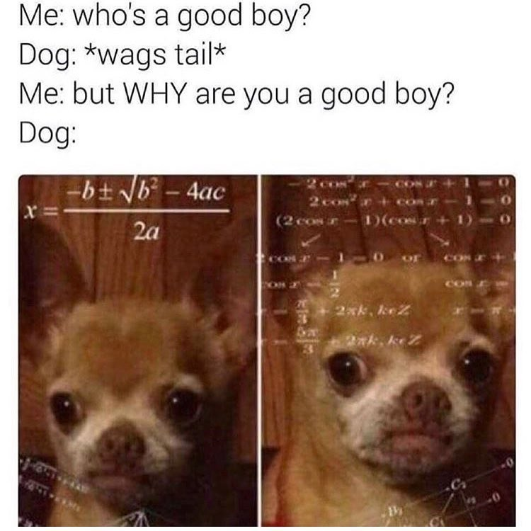 Funny meme of a dog wondering why he is a good boy.