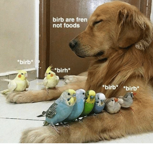 24 high quality birb memes that will elevate your mood memebase