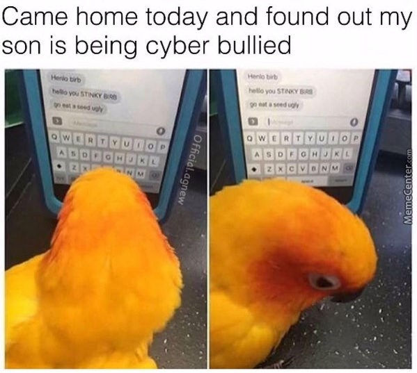 birb meme - Bird - Came home today and found out my son is being cyber bullied Henlo birb Herlo birb heo you STINKY BRS belo you STINKY BRS 99 et a seed ughy gn eat a seed ugly QW Qw MemeCenter.com Official agnew