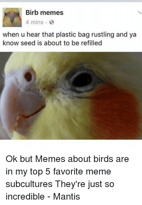 birb meme - Bird - Birb memes 4 mins when u hear that plastic bag rustling and ya know seed is about to be refilled Ok but Memes about birds in my top 5 favorite meme subcultures They're just incredible Mantis