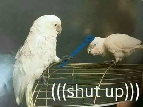 birb meme - Bird - l(shut up)
