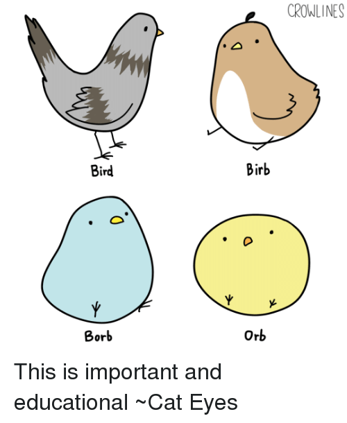birb meme - Beak - CROWLINES Birb Bird Y Y Orb Borb This is important and educational Cat Eyes