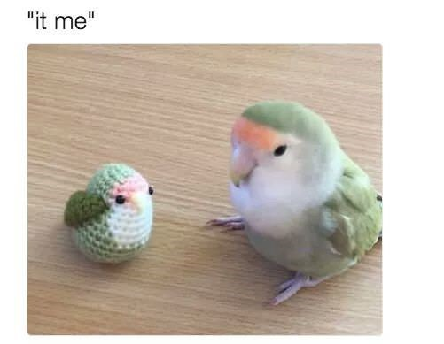 "birb meme - Bird - ""it me"""