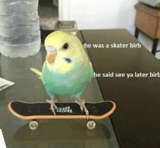 birb meme - Bird - he was a skater birb he said see ya later birb 0