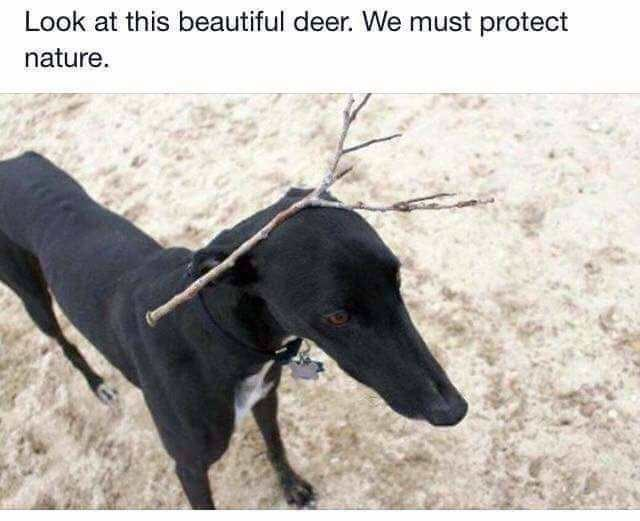Dog - Look at this beautiful deer. We must protect nature