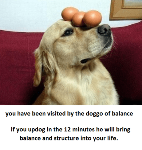 Dog - you have been visited by the doggo of balance if you updog in the 12 minutes he will bring balance and structure into your life.