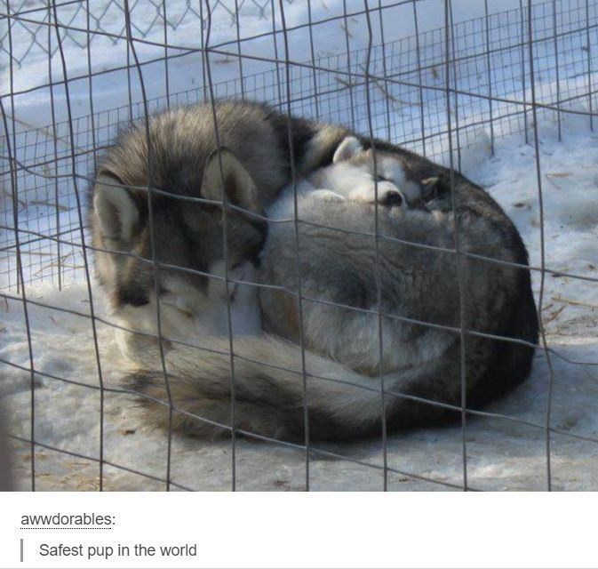Cage - awwdorables: Safest pup in the world