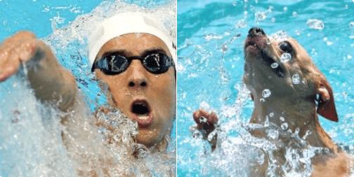 doppelganger dogs - Swimmer