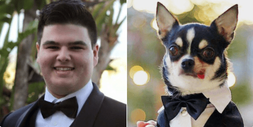 doppelganger dogs - Bow tie