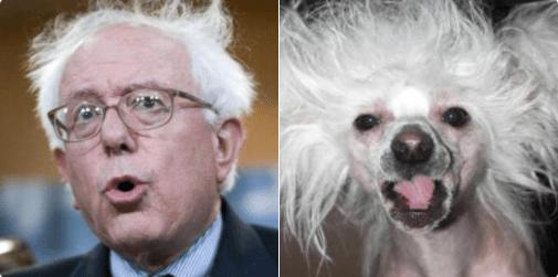 doppelganger dogs - Nose