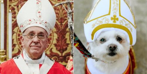 doppelganger dogs - Canidae