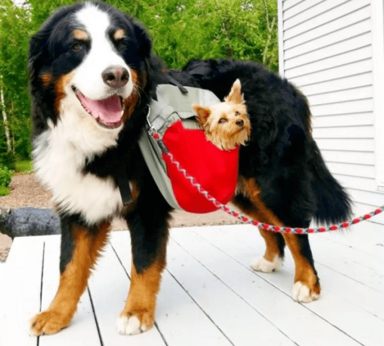 Dog and little dog