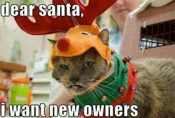 Photo caption - dear santa, i want new owners
