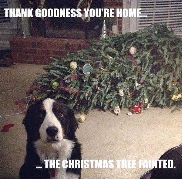 Dog - THANK GOODNESS YOU'RE HOME THE CHRISTMAS TREE FAINTED.