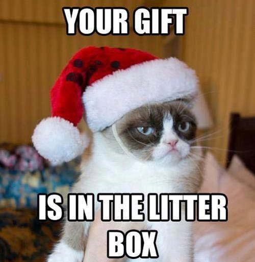 Cat - YOUR GIFT IS IN THE LITTER BOX