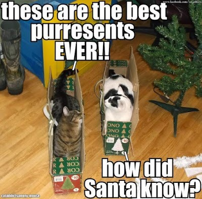 Photo caption - these are the best purresents EVER!! sww.fahook.com/ay ONO ONO A ONO RASO RA SOD RASR how did Santa know? atacoictsanony mouse