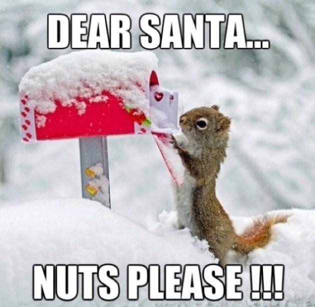 Squirrel - DEAR SANTA.. NUTS PLEASE!!