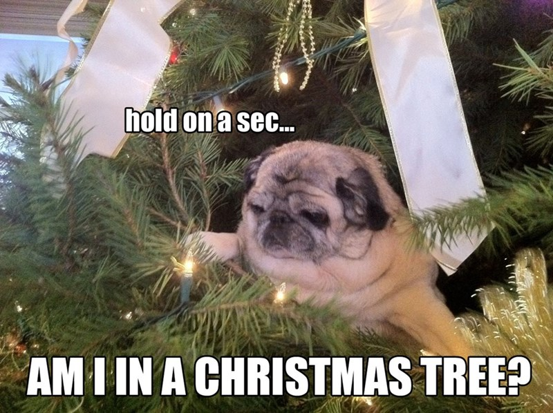 Dog - hold on a sec... AMI IN A CHRISTMAS TREE?