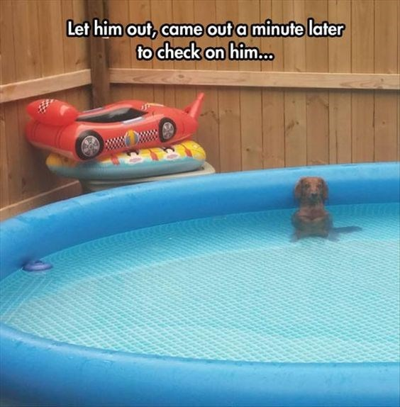 Swimming pool - Let him out, came out a minute later check on him.. wwDX