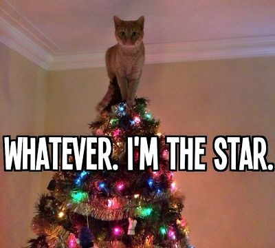 Christmas tree - WHATEVER IM THE STAR.
