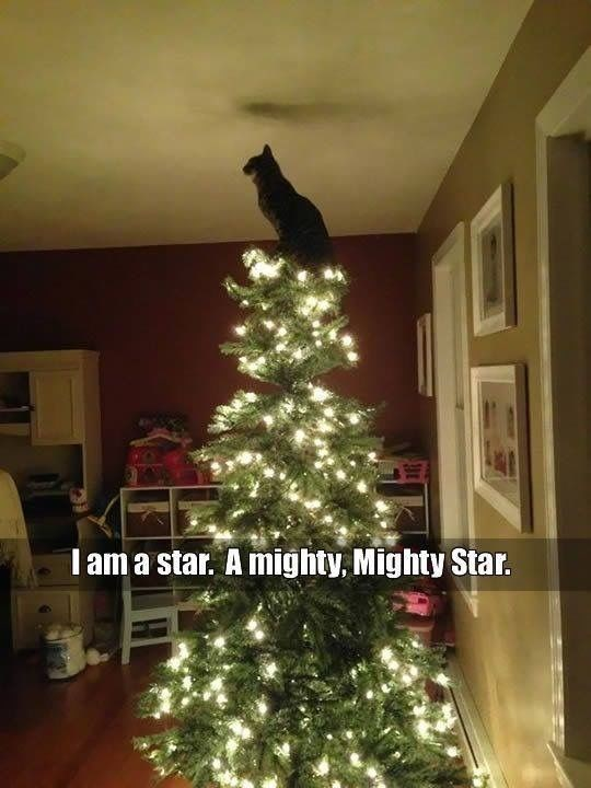 Christmas tree - Tama star. A mighty, Mighty Star.