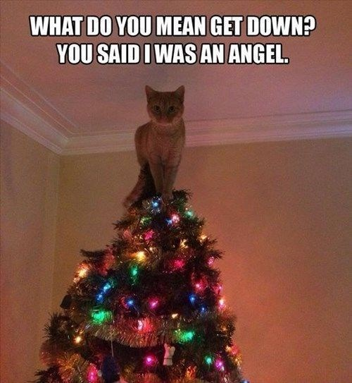 Christmas tree - WHAT DO YOU MEAN GET DOWN? YOU SAID IWAS AN ANGEL.