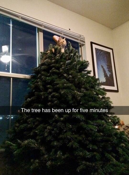 Tree - The tree has been up for five minutes