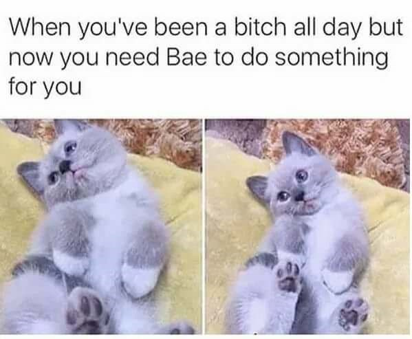 meme about sucking up to someone after being mean with pics of cat looking cute