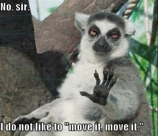 Wednesday lemur meme about move it move it song