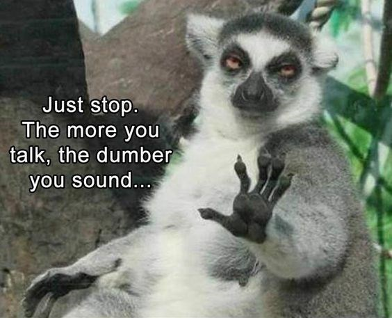 lemur wednesday meme about sounding dumber the more you talk