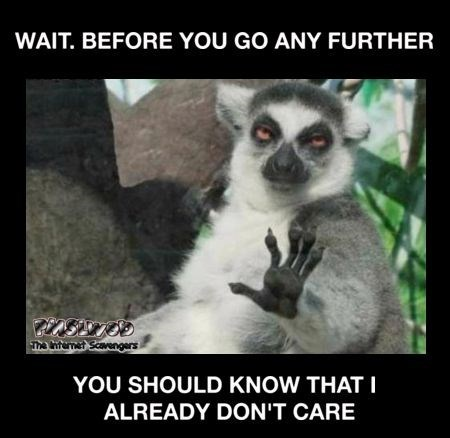 lemur Wednesday meme about not caring what you are saying so stop