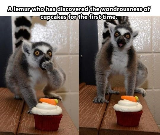 Wednesday Lemur meme of discovering pancakes